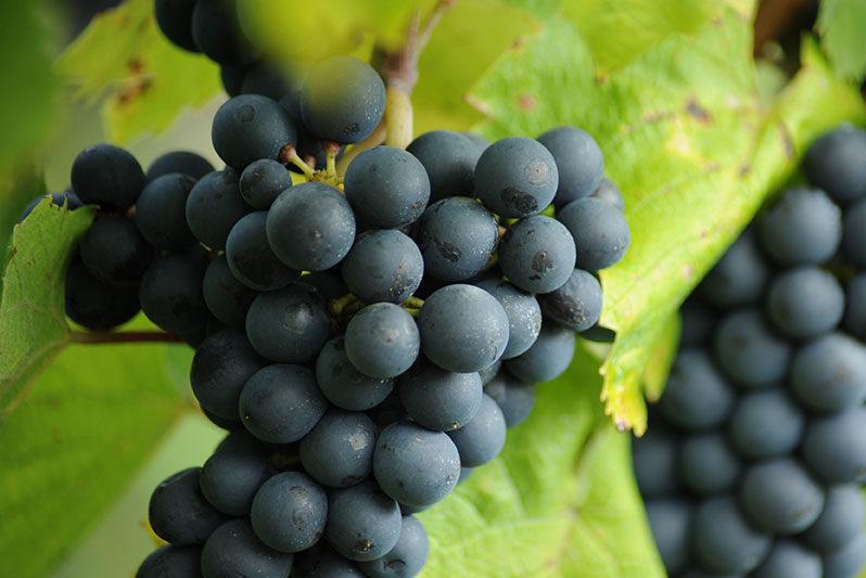 Vin coteaux du lyonnais